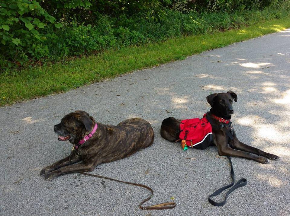 Dog Training Fayetteville Ar